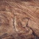 Aktualności: Technika szlifowania drzewa